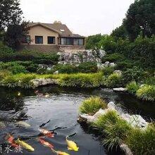 无锡哪里有锦鲤池改造公司鱼缸鱼池清洗图片