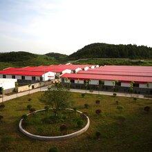 贵州省铜仁市大型养猪场(2000头种猪)寻求合作伙伴