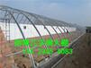 塑料大棚建设一亩温室大棚造价需要多少钱