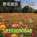 昌乐县哪里卖冬季牧草种子黑麦草种子批发