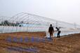 林州市供应蘑菇香菇大棚建造详细说明