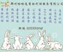河南地区的条码去哪注册郑州条码找谁办理好呢