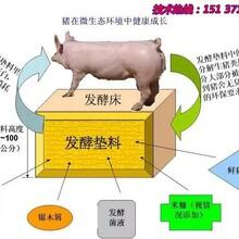 安阳发酵床养殖菌种哪里有卖的图片