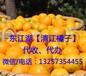 东江湖清江蜜桔、橘桔子代办、代收,微商水果桔子果园一件代发