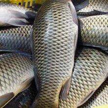 长沙冻品配送、长沙水产配送、长沙鱼尾配送、长沙鱼类