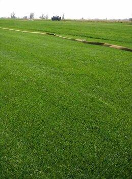 【铺教程视频_辽宁绿化草坪出售草坪别墅管理小区价格别墅客厅图片