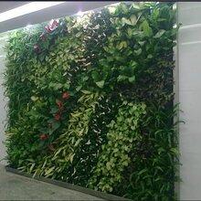 北京哪里有仿真植物墙定做仿真植物墙墙体垂直立体