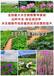 青岛专业承包种植荷花水生植物