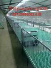 专业生产2.23.6母猪产床