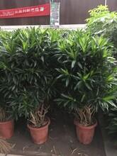 供應北京綠色植物圖片