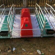 养猪设备母猪产床双体猪用产床猪用分娩床单体产床定位栏