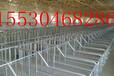 专业生产母猪产床自动化定位栏料线猪场设计畜牧业机械