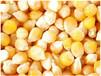 大量求购玉米高粱大豆等饲料原料