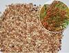 大量求购玉米大豆高粱