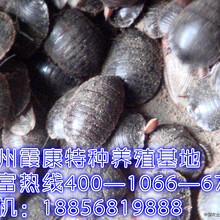 商丘市民权县土元养殖大王的在线技术指导图片