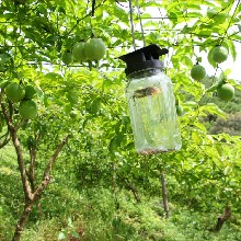 一件代发百香果欢迎淘宝天猫微商咨询代理5斤装大果图片