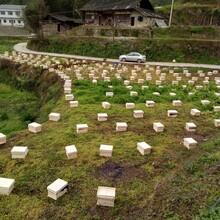贵州蜂盛蜜蜂养殖有限公司贵州蜜蜂养殖基地贵州中蜂养殖基地图片
