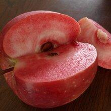 紅色之愛紅肉蘋果圖片