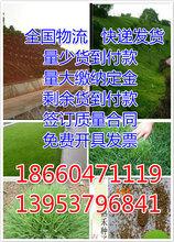 畜牧草种子价格图片
