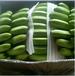 云南优质香蕉
