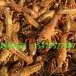 威海小龙虾多少钱一斤