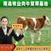 大同西门塔尔利木赞夏洛莱改良黄牛肉牛牛犊免费运输