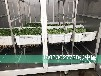 庆华商用豆芽机花生芽机芽苗机催芽机大型豆芽生产线