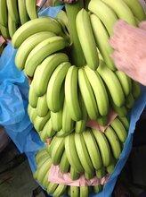 云南香蕉基地常年供货