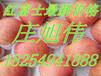 山东红富士苹果较去年价格有所下降