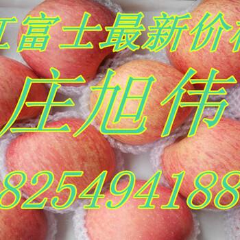 山东苹果基地美八苹果今日直销价格