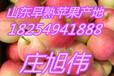 山东美八苹果价格走势