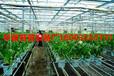安平华首丝网设备厂大量生产温室养花苗床网,移动苗床网,镀锌苗床网