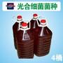 高效发酵剂鱼塘改底粪肥发酵种植养殖光合菌种图片