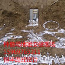 了畜牧养殖加温设备环保燃气养殖加温锅炉图片