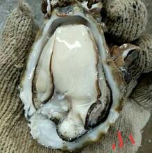 重庆生蚝多少钱一斤,生蚝哪里有卖?