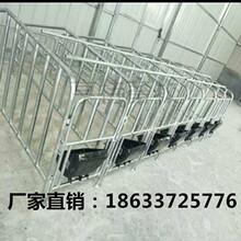 湖南永州加厚定位栏热镀锌限位栏猪围栏食槽厂家电话