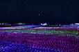 色彩花园灯光节出售