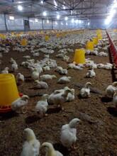 猪舍环保采暖锅炉猪舍燃气加温锅炉减少环境污染图片