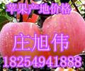 山东红将军苹果今日价格