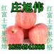 今天山东红富士苹果批发价格