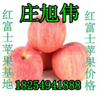 山东冷库红富士苹果产地价格图片3