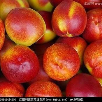 山东冠县苹果上市了