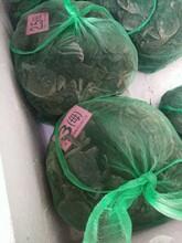 阳澄湖大闸蟹几月份吃好呀?