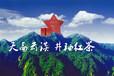 供应井冈山野生高档优质井袖红高山茶