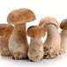 菌棒夏菇的疗效