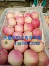 紅將軍蘋果價格圖片