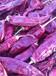 新疆上游公社出售各种干辣椒,有需要请联系