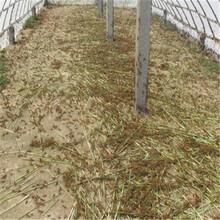 蝗蟲養殖紗網韌性好抗拉力強廠家直銷價格優惠圖片