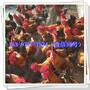 乐山土鸡苗孵化厂价格荒山图片