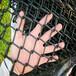 厂家直销动物园包塑勾花网防护网绿化养殖用勾花网